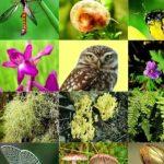Биоразнообразие, которое мы потеряли