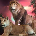 Симба возвращается: Park Cinema устроил грандиозную вечеринку «Короля Льва»