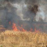 На обширной территории кустарников в Агсуинском районе вспыхнул пожар