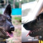 Россия вернула собаку арестованных украинских моряков на родину