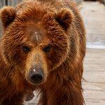 Для одних – развлечение, для других–мучение: эксплуатации диких животных в центрах отдыха должен быть положен конец
