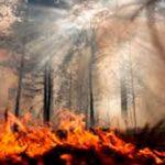 В Сибири горят более 25 тысяч гектаров леса