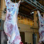 От фермы до стола: приведет ли система идентификации крупного рогатого скота к улучшению качества мясной продукции?