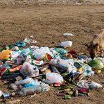 9 августа пройдет массовая акция по очистке от мусора морского побережья