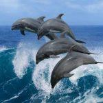 На западе Африки произошел массовый выброс на берег дельфинов
