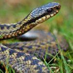 В США щенок спас хозяев от ядовитой змеи ценой собственной жизни