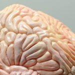 Ученые нашли связь между скоростью ходьбы и старением мозга