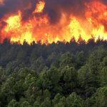 В Грузии горит Атенский лес