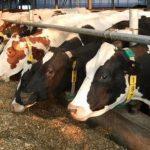 Продажу кормов и кормовых добавок в Азербайджане освобождают от НДС