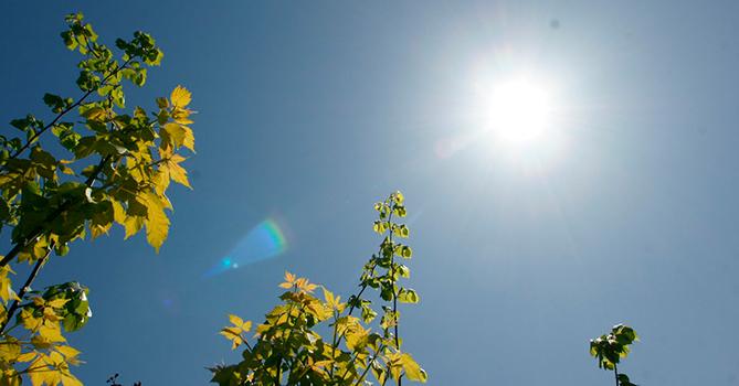 Понедельник никаких изменений в погодных условиях не сулит