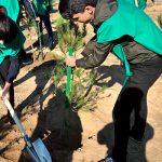 Масштабное озеленение: улучшение экологической ситуации или напрасная трата средств?