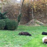 Заложники бакинских приютов: народ не оплатит — собак усыпят?