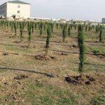 Армия Азербайджана в этом месяце посадит свыше 200 тыс. деревьев