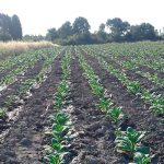 Карантин ударил по сельскому хозяйству: обильного урожая ждать не стоит
