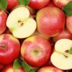 Экспорт яблок увеличится, а за ним и цены на рынках
