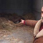 В Габале пытались продать краснокнижных оленей