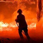 Власти Австралии создадут комиссию для расследования причин лесных пожаров