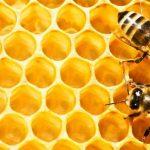 Красота от природы: каковы перспективы развития отечественной косметической промышленности на базе продуктов пчеловодства?