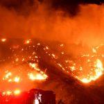 В Австралии более миллиарда животных погибли во время лесных пожаров