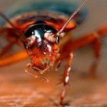 Гигантский летающий таракан поселился на кухне студента и оставил его без еды