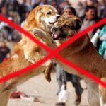 Кровавые забавы: в стране проводятся собачьи бои, запрещенные законом