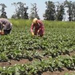 Поправки в закон «О безналичных расчетах» затронут селян