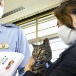 Японская полиция наградила кошку за спасение человека