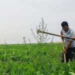 Новые правила поддержки селян: субсидии фермерам привяжут к результату