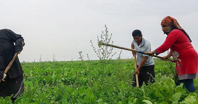 В рамках международного проекта будет оказана поддержка женщинам-фермерам