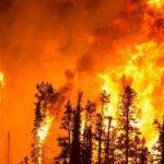 25 военных погибли при тушении лесных пожаров в Алжире