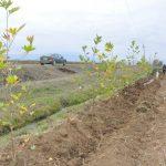 В освобожденном Агдаме посажено 1000 сортов деревьев