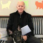 Собаки и кошки в мировой политике