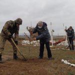 В освобожденном от оккупации Джебраиле посажены восточные платаны