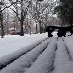 Завтра в Баку ближе к ночи синоптики обещают мокрый снег