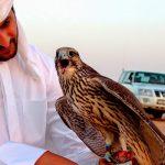 Министерство экологии высказалось по поводу арабских туристов
