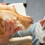 Ученые доказали, что собаки могут выявлять коронавирус с точностью до 96%