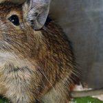 Без вины виноватые: дикие животные томятся в тесных клетках зоомагазинов