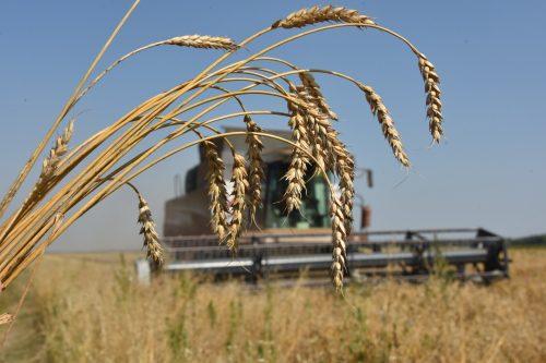 azerbaycan zakupaet pshenitsu u rossii